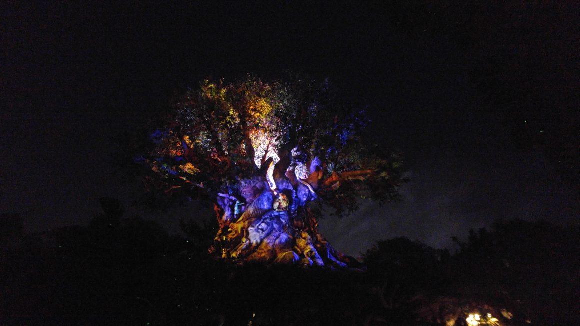 Tree of Life after dark